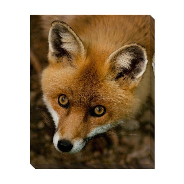 Foxy Oversized Gallery Wrapped Canvas