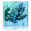 Oliver Gal Artist Co 'Oceana' Canvas Print