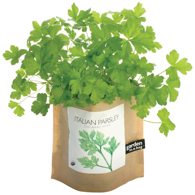 Garden-in-a-Bag Herb Collection Organic Italian Parsley