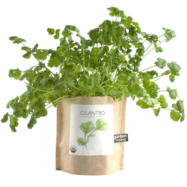 Garden-in-a-Bag Herb Collection Organic Cilantro