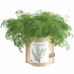 Garden-in-a-Bag Herb Collection Organic Dill