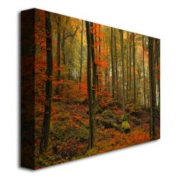 Philippe Sainte-Laudy 'Transformation Fall' Canvas Art