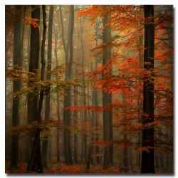 Philippe Sainte-Laudy 'Fall' Canvas Art