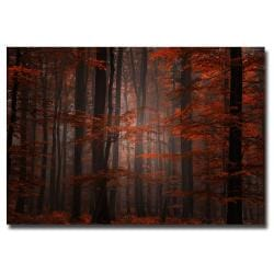 Philippe Sainte-Laudy 'Spiritual Wood' Canvas Art