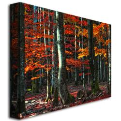 Philippe Sainte-Laudy 'Food for Soul' Canvas Art