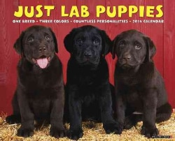 Just Lab Puppies 2014 Calendar (Calendar)