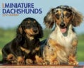 Just Miniature Dachshunds 2014 Calendar (Calendar)