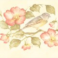 Brewster Peach Wild Rose Bird Border Wallpaper