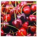 Cherries Canvas Wall Art