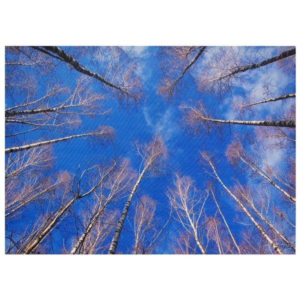 Treetops Canvas Wall Art