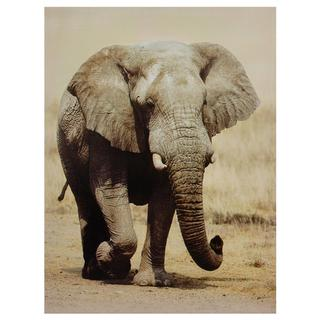Walking Elephant Canvas Wall Art