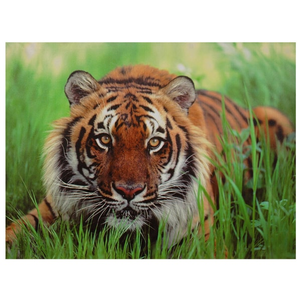 Crouching Tiger Canvas Wall Art