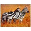 Plains Zebras Canvas Wall Art