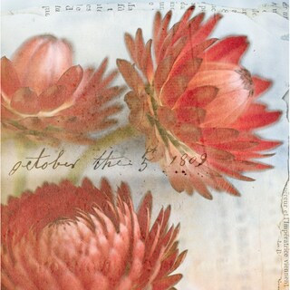 Red Strawflower I  Paper Print (Unframed)