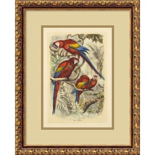 'Macaw Ara Macao' Framed Art Print