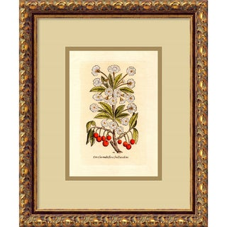 'Cherry (Cerasus Multiflora)' Framed Art Print