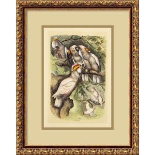 'Cockatoo (Cacalua)' Framed Art Print