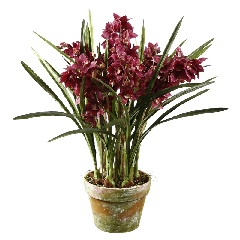 Fuchsia Orchid 47-inch Tall Potted Plant
