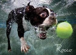 Underwater Dogs: 1,000 Pieces (General merchandise)