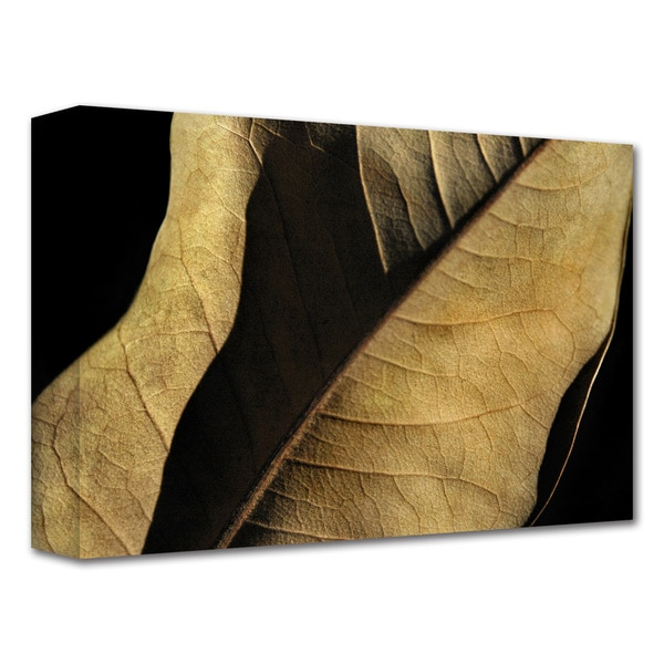 Dan Holm 'Natural Selection' Gallery-Wrapped Canvas