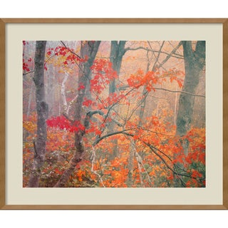 William Neill 'Maple Trees in Fog Near Eagle Lake, Acadia National Park, Maine, 1990' Framed Art Print
