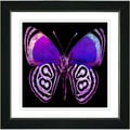 Studio Works Modern 'Zebra Butterfly - Purple' Framed Print