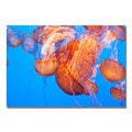 Ariane Moshayedi 'Jellyfish Close' Canvas Art