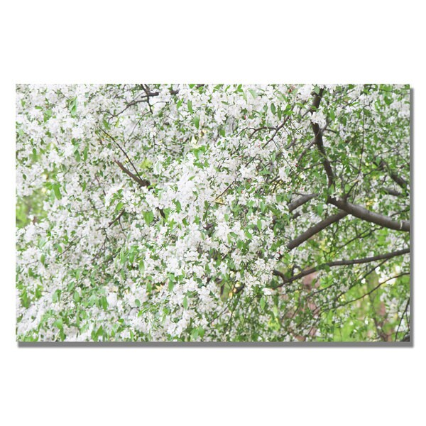 Ariane Moshayedi 'Flowers in the Trees' Canvas Art