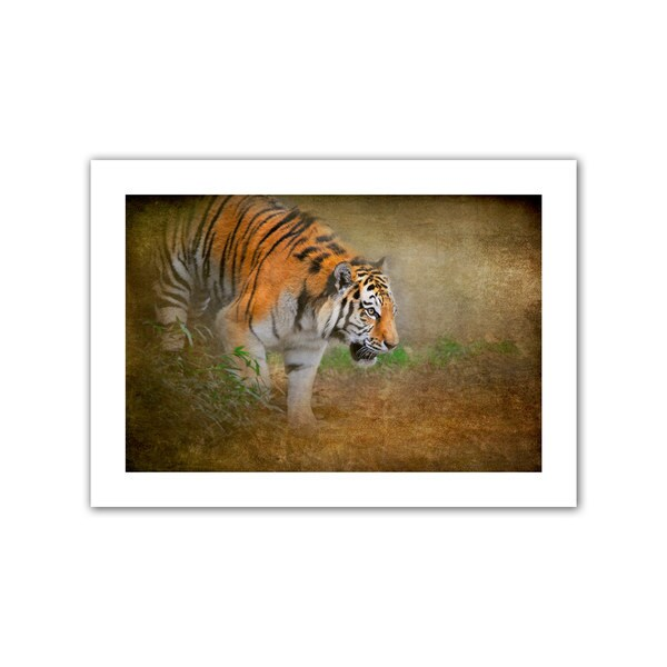 David Liam Kyle 'On the Prowl' Unwrapped Canvas