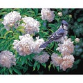 Paint By Number Kit 16&quot;X20&quot;-Blue Jay &amp; Blossoms