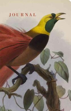 Bird (Hardcover)