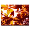 Amy Vangsgard 'Light Coming Through Tree Leaves' Medium Contemporary Canvas Art