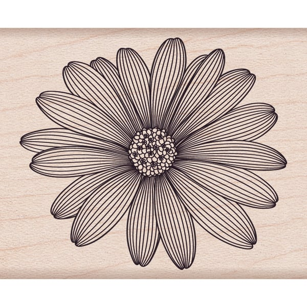 """Hero Arts Mounted Rubber Stamps 4""""X1""""-Etched Daisy 11181733"""