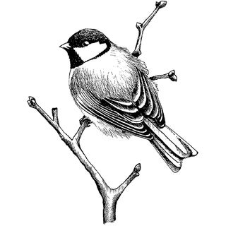 Magenta Cling Stamps-Perched Chickadee