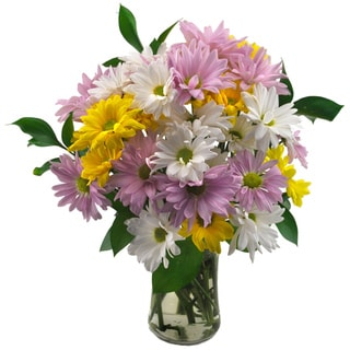 Sweets in Bloom 'Delightful Daisies' Flower Bouquet