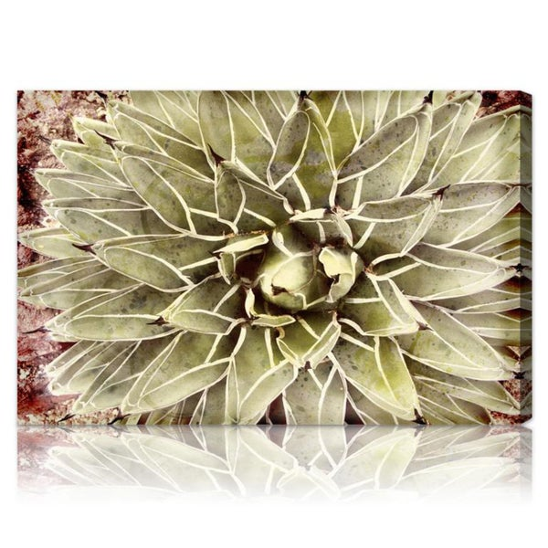 The Oliver Gal Artist Co. 'Cactus Flower' Fine Art Canvas