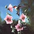 Kevin Daniel 'Ruby Throated Hummingbird' Paper Print (Unframed)