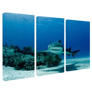 Chris Doherty 'Shark' 3-piece Canvas Art Set