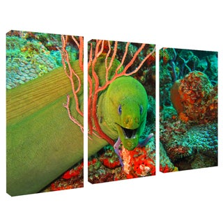 Chris Doherty 'Eel' Canvas Art 3-piece Set