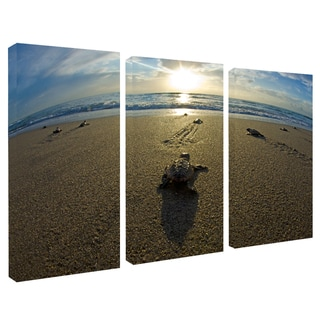 Chris Doherty 'Loggerhead' Canvas Art 3-piece Set