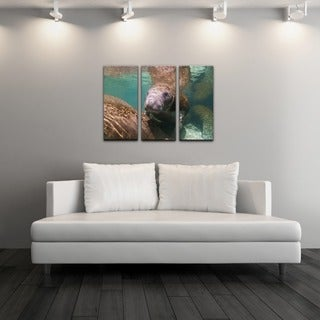 Chris Doherty 'Manatee' Canvas Art 3-piece Set