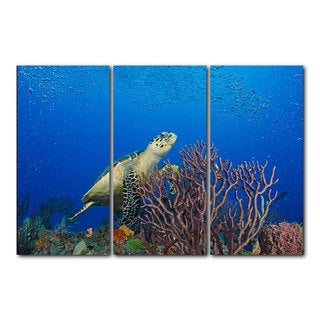Chris Doherty 'Turtle' 3-piece Gallery-wrapped Canvas Art Set