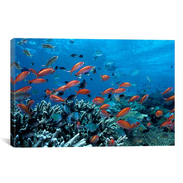 Ocean Fish Coral Reef' Canvas Print Wall Art
