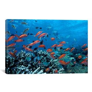Ocean Fish Coral Reef' Canvas Print Wall Art