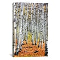 'Autumn In Aspen' Canvas Art