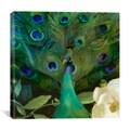 Color Bakery 'Aqua Peacock' Canvas Art Print
