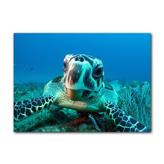 Chris Doherty 'Turtle' Canvas Wall Art