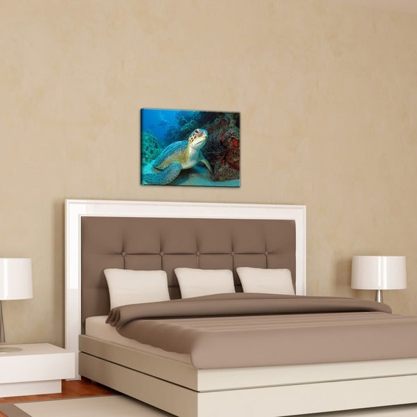 Chris Doherty 'Turtle' Large Canvas Wall Art