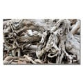 Kurt Shaffer 'Drift Wood' Canvas Art