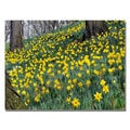 Kurt Shaffer 'Hillside of Daffodils' Canvas Art